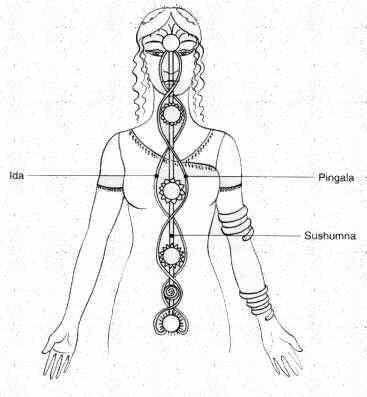La posizione dei chakra